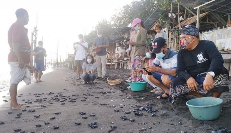 www.nusabali.com-ratusan-ekor-tukik-dilepasliarkan-di-penimbangan
