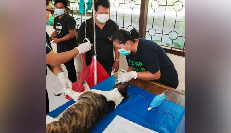 www.nusabali.com-tekan-populasi-anjing-liar-distan-terapkan-metode-kastrasi