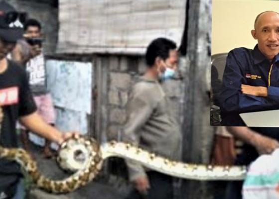 Nusabali.com - hindari-ular-masuk-rumah-antisipasi-dengan-cara-ini