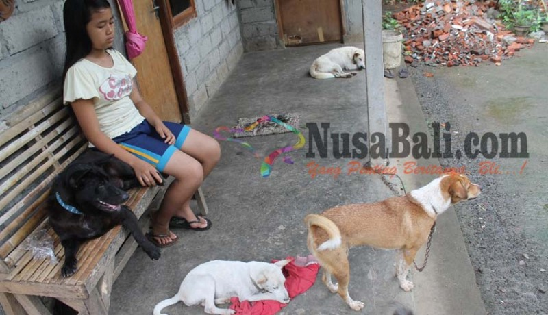 www.nusabali.com-berkat-peluk-anjing-sembuh-tanpa-operasi