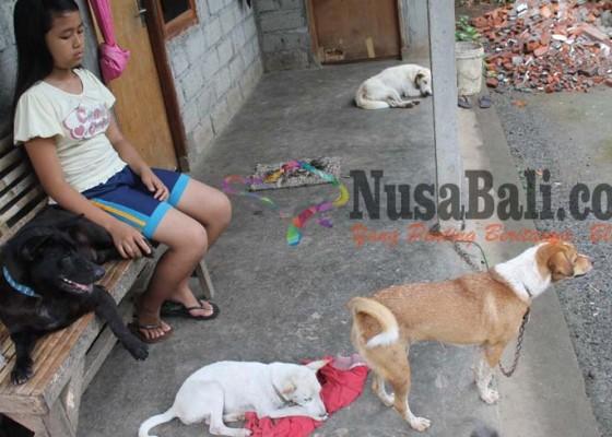 Nusabali.com - berkat-peluk-anjing-sembuh-tanpa-operasi