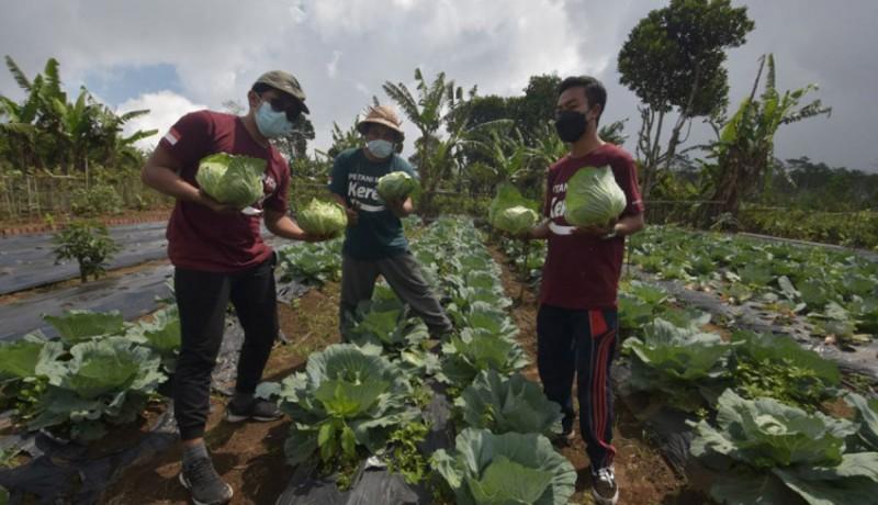 www.nusabali.com-pemuda-gobleg-buleleng-adakan-pelatihan-pertanian-berbasis-teknologi