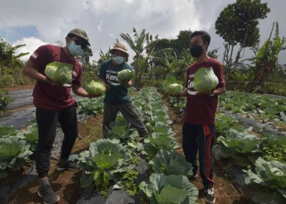 Nusabali.com - pemuda-gobleg-buleleng-adakan-pelatihan-pertanian-berbasis-teknologi