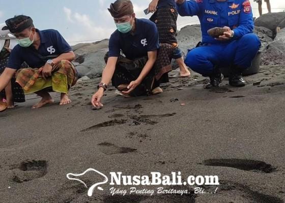 Nusabali.com - alumni-sma-pgri-klungkung-reuni-sambil-lepas-tukik-di-pantai-watu-klotok