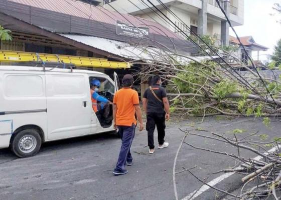 Nusabali.com - pohon-tumbang-rusak-atap-showroom-mobil