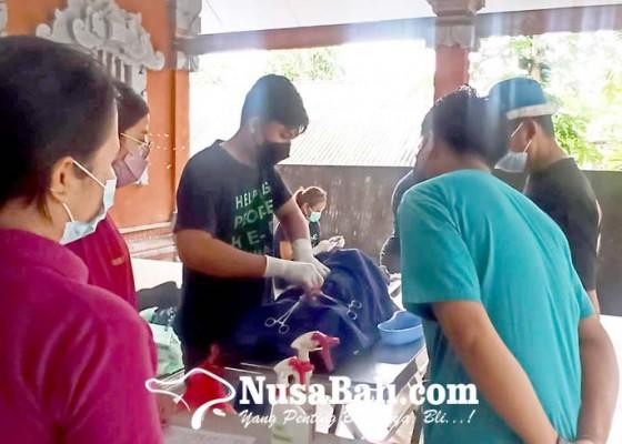 Nusabali.com - tekan-rabies-dinas-pertanian-gelar-sterilisasi-anjing-dan-kucing