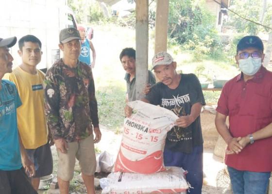 Nusabali.com - buleleng-terima-alokasi-pupuk-subsidi-15-ton