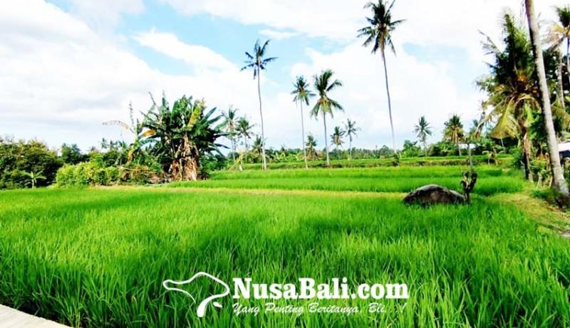 www.nusabali.com-rendah-minat-petani-ikut-asuransi-tani