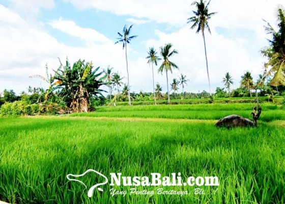Nusabali.com - rendah-minat-petani-ikut-asuransi-tani
