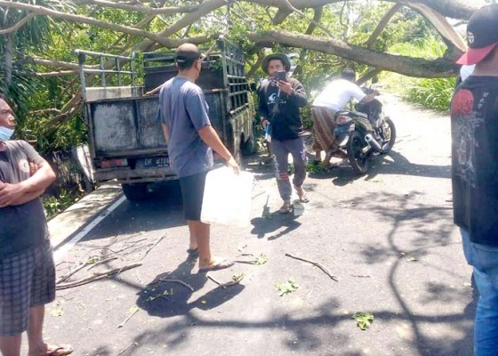 Nusabali.com - dahan-pohon-terseret-truk-timpa-mobil-dan-motor