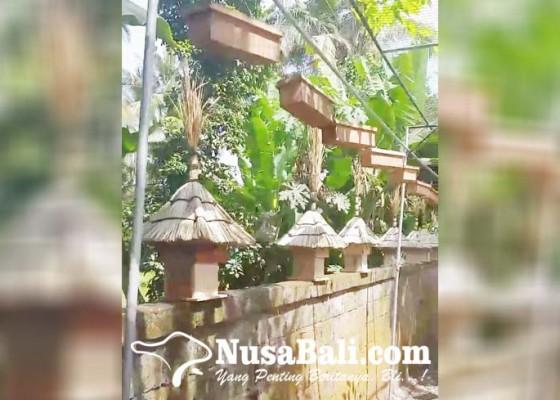 Nusabali.com - peternak-madu-kela-kela-ajak-warga-pasang-koloni-di-rumah