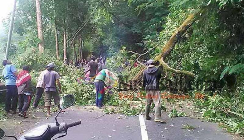 www.nusabali.com-pohon-tumbang-sempat-tutup-jalan-ke-besakih