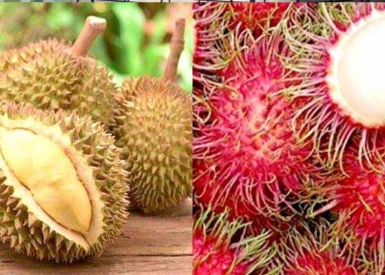 Nusabali.com - kesehatan-nikmati-manfaat-buah-tropis