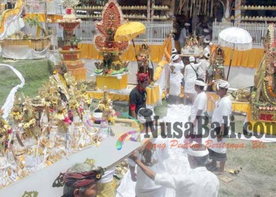 Nusabali.com - khusyuk-mamukur-massal-di-desa-pakraman-perasi
