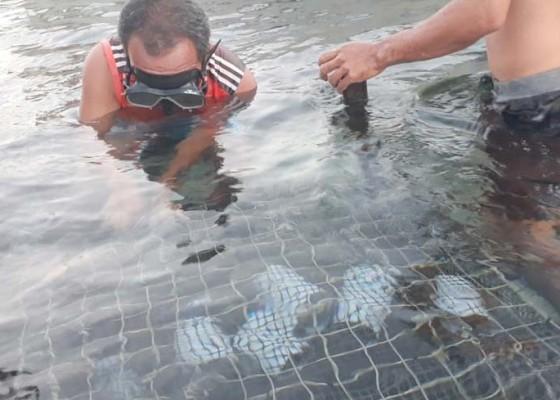 Nusabali.com - abalon-di-lembongan-dimakan-belut-laut