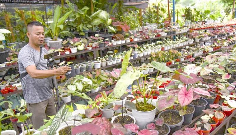 www.nusabali.com-penjualan-tanaman-hias-secara-daring