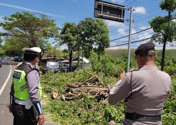 Nusabali.com - pohon-tumbang-di-medsos-kecoh-polisi