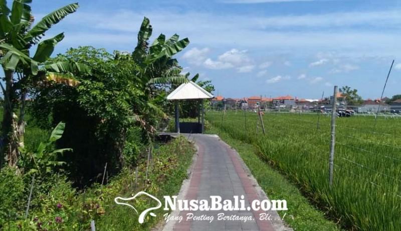 www.nusabali.com-subak-kerdung-menjaga-warisan-pertanian-di-tengah-kota-denpasar