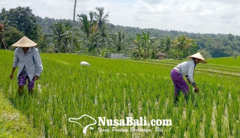 www.nusabali.com-desa-jatiluwih-dipromosikan-di-perancis
