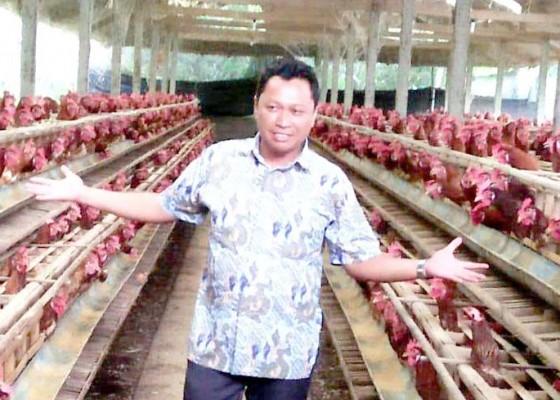 Nusabali.com - imbas-ppkm-harga-telur-ayam-turun