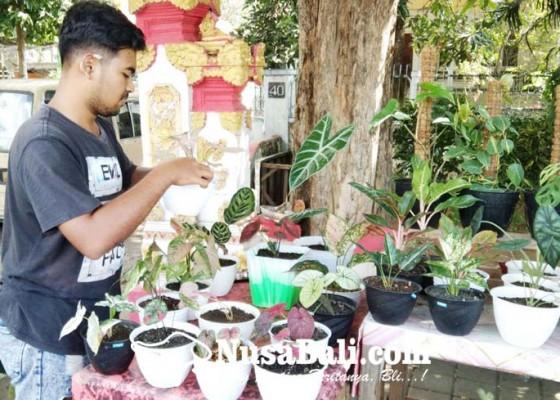 Nusabali.com - dari-hobi-raup-rezeki-lewat-tanaman-hias