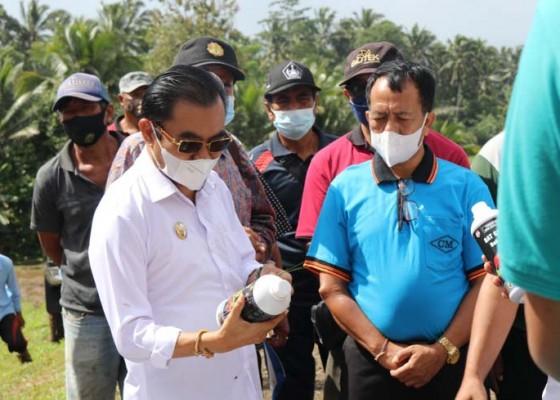 Nusabali.com - petani-tabanan-masih-terbelit-aneka-masalah