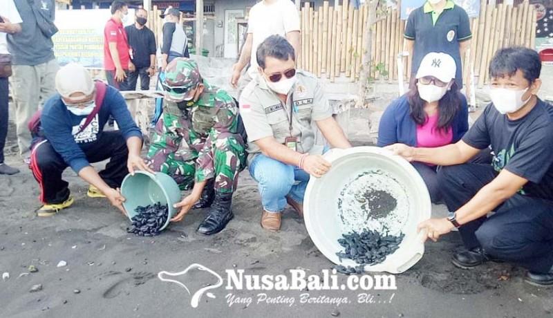 www.nusabali.com-konservasi-penyu-di-buleleng-meluas