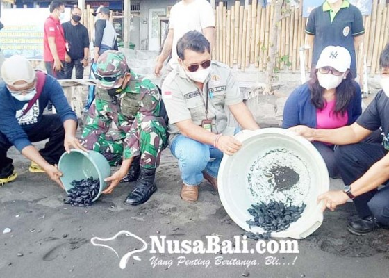Nusabali.com - konservasi-penyu-di-buleleng-meluas