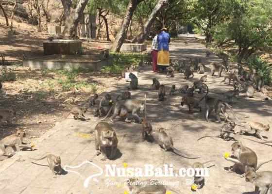 Nusabali.com - masyarakat-minta-kawasan-suci-buleleng-barat-tetap-dilindungi