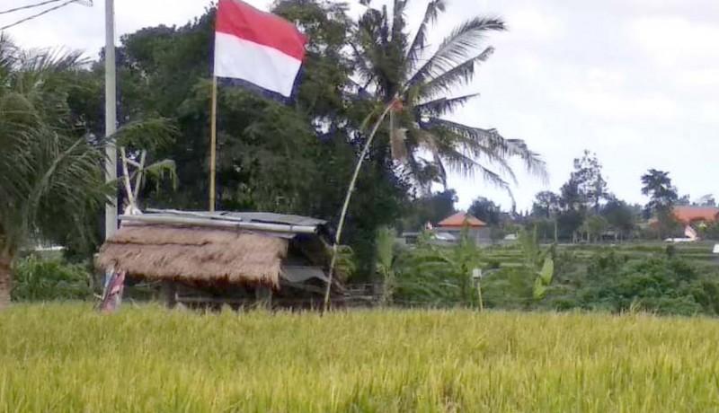 www.nusabali.com-perubahan-cuaca-belum-jadi-ancaman-pertanian