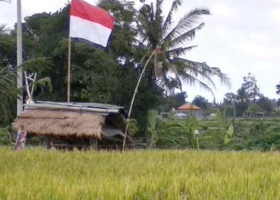 Nusabali.com - perubahan-cuaca-belum-jadi-ancaman-pertanian