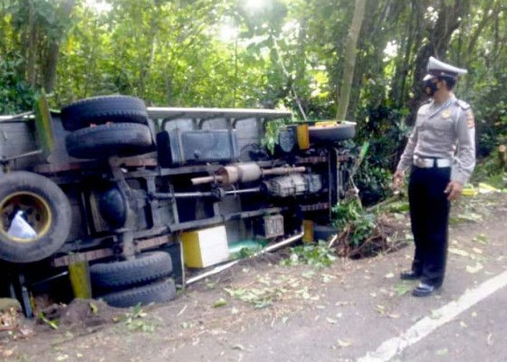 Nusabali.com - sopir-ngantuk-truk-muat-jagung-terguling
