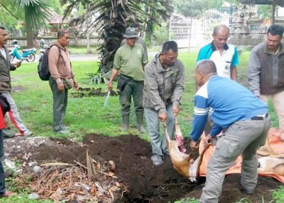 Nusabali.com - 4-kijang-dibantai-di-tnbb-5-pelaku-kabur