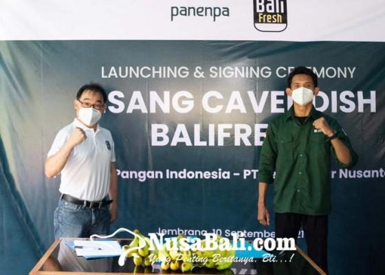 Nusabali.com - panenpa-berdayakan-pisang-cavendish-bali-fresh-melalui-kolaborasi-eksklusif-bersama-sewu-segar-nusantara