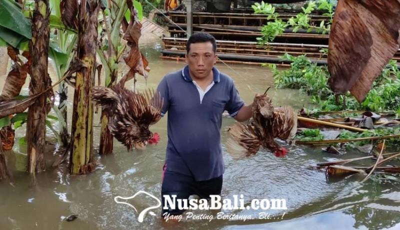 www.nusabali.com-rumahnya-tenggelam-235-kk-sempat-mengungsi