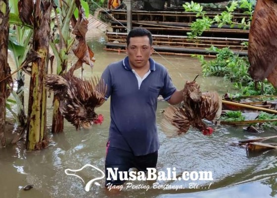 Nusabali.com - rumahnya-tenggelam-235-kk-sempat-mengungsi