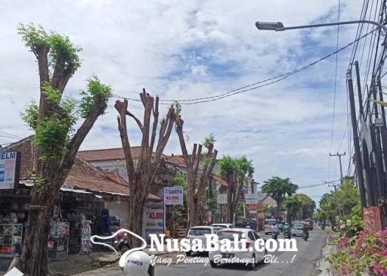Nusabali.com - dinas-lhk-denpasar-siapkan-asuransi-rp-100-juta-untuk-50000-pohon
