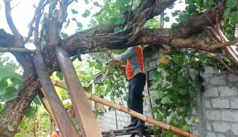 www.nusabali.com-pohon-tumbang-timpa-rumah-warga-di-kusamba