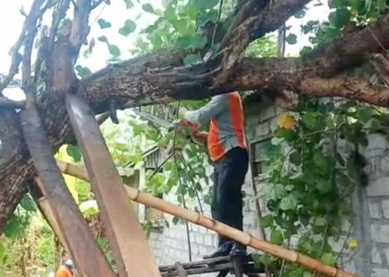 Nusabali.com - pohon-tumbang-timpa-rumah-warga-di-kusamba