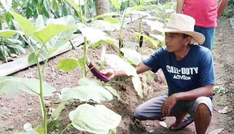 www.nusabali.com-lahan-kering-dimanfaatkan-untuk-edukasi-pertanian