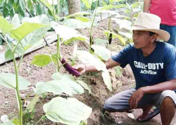 Nusabali.com - lahan-kering-dimanfaatkan-untuk-edukasi-pertanian