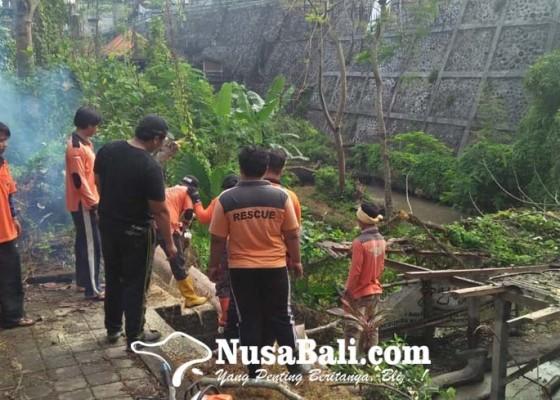 Nusabali.com - pohon-tumbang-menimpa-pemandian-umum-pura-beji-ketewel
