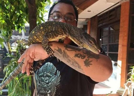 Nusabali.com - komunitas-reptile-bali-wadah-pecinta-reptil-saling-berbagi-dan-edukasi