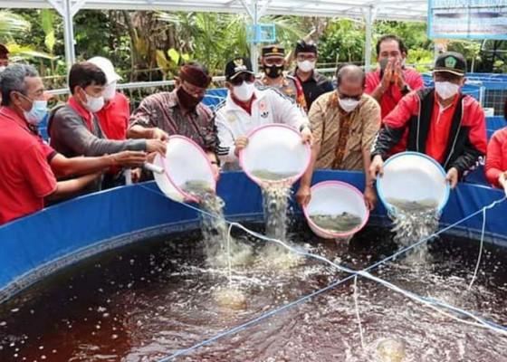 Nusabali.com - bupati-sanjaya-dorong-perikanan-bioflok