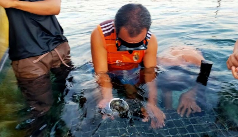 www.nusabali.com-abalon-diharapkan-jadi-seafood-favorit-di-nusa-penida