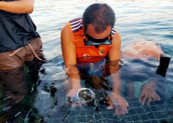 Nusabali.com - abalon-diharapkan-jadi-seafood-favorit-di-nusa-penida