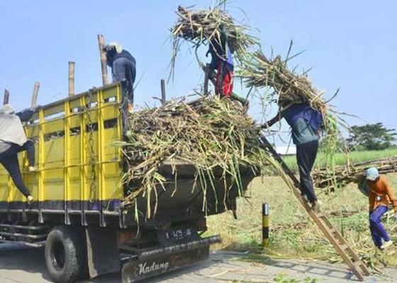 Nusabali.com - pemerintah-bentuk-holding-sugarco