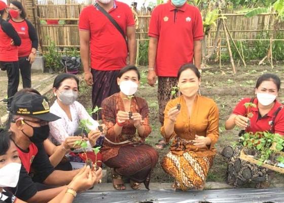 Nusabali.com - pemdes-saba-kembangkan-bibit-pangan-11-are