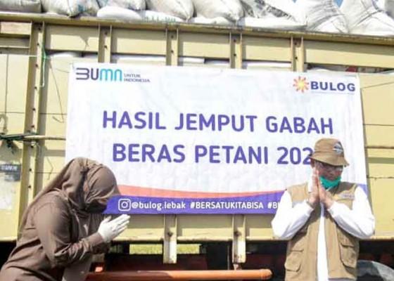 Nusabali.com - bulog-serap-satu-juta-ton-beras-petani