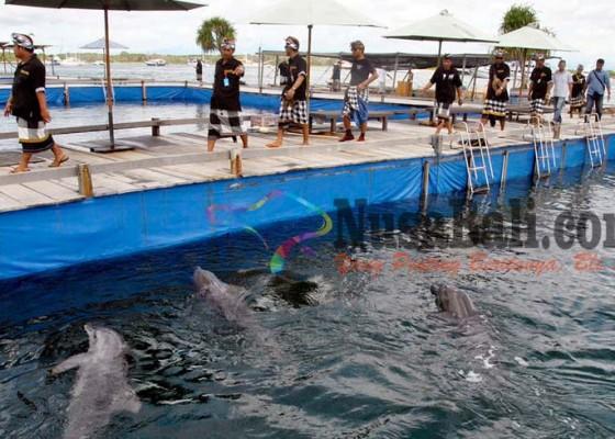 Nusabali.com - warga-serangan-segel-atraksi-lumba-lumba